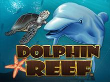 Играть онлайн в Риф Дельфина
